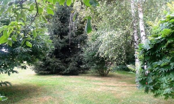 Tonte de pelouses